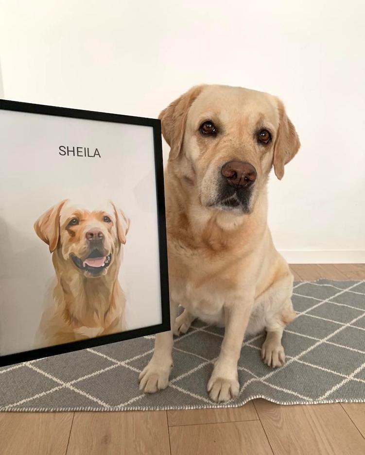 recenzia_sheila_pred-a-po